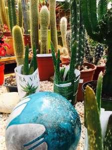 Location de plantes par votre jardinerie aux environs de Béziers