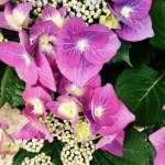 Saint-Chinian, toute la jardinerie avec une gamme variée de plantes annuelles et vivaces