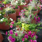 Fleurissement annuel