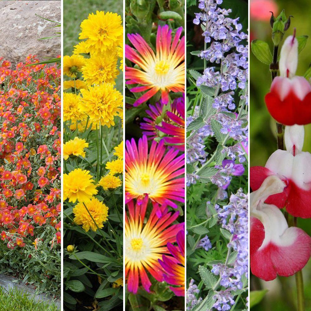 plantes-melliferes
