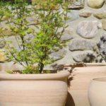 (Ambiance Marketline)[Pot] Terre Catalane Chacal-01847e40